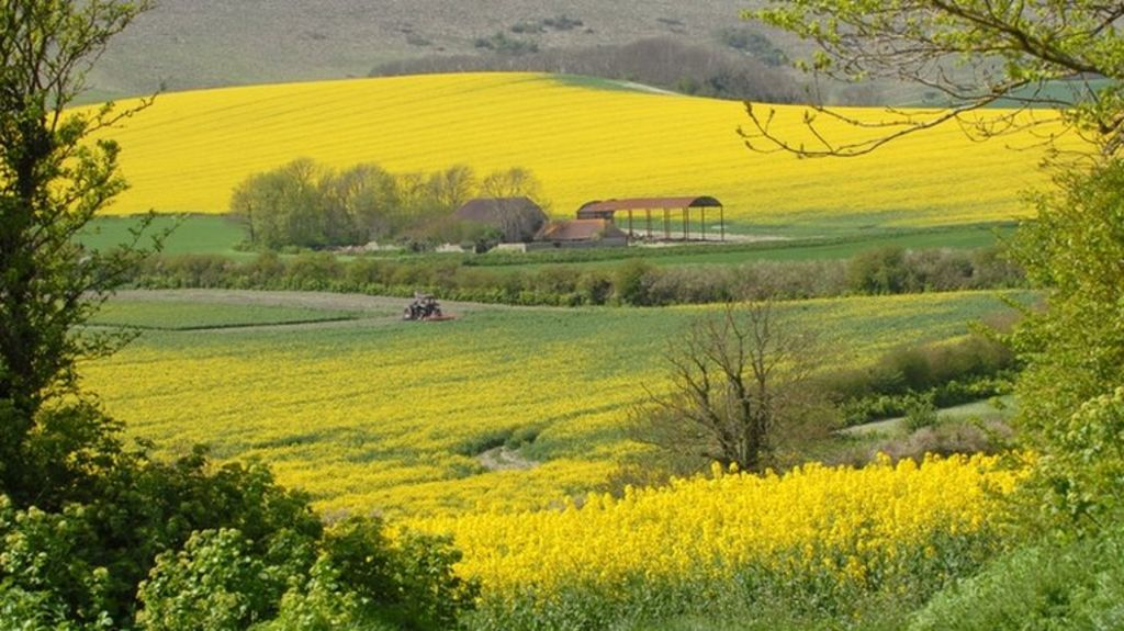 Three cheers for sale a bration flowering fields lisas stamp studio ireland flowering fields mightylinksfo Images