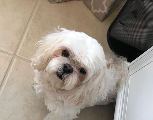 Our-Sweet-Dog-Daisy